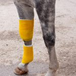 Best Standing Wraps For Horses Reviews & Buying Guide