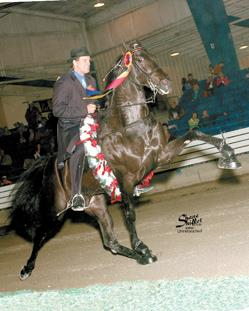 nypb most expensive tennessee walker horse