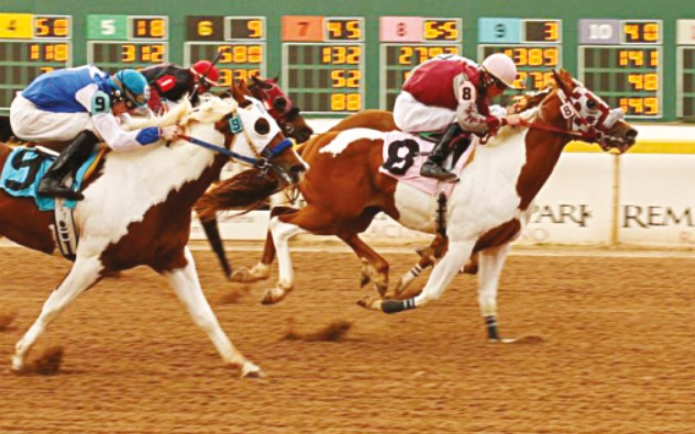 paint horse racing