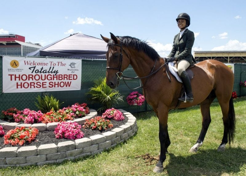 thoroughbred horse show