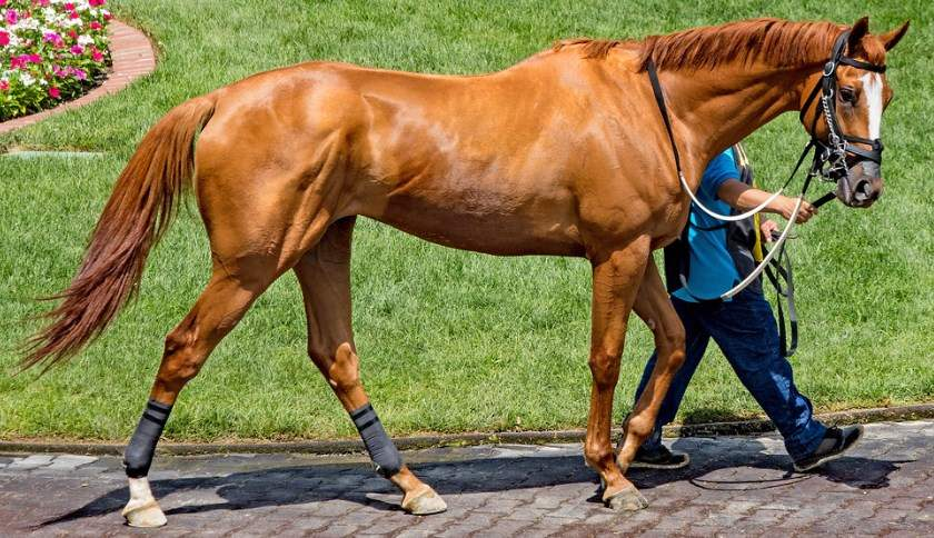 thoroughbred horses weight