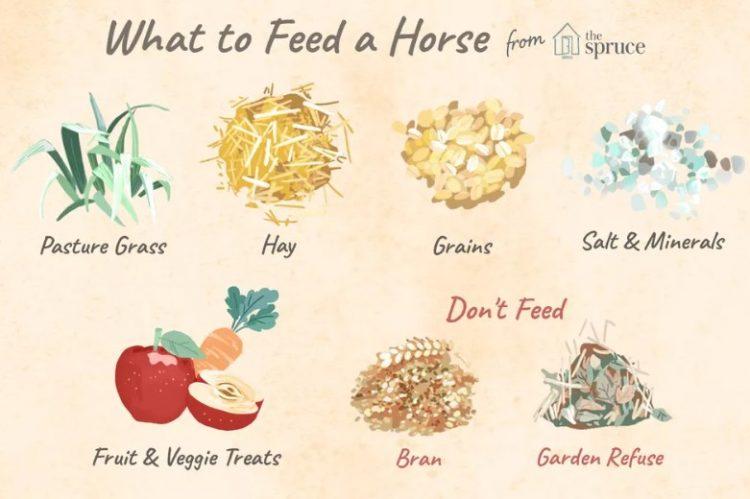 Plenty types of feeds for horse