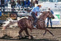Best Barrel Racing Saddles Reviews & Buying Guide