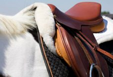 Best-English-Saddle-Pad-Reviews-and-Buying-Guide