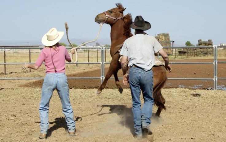 Gentle way to Breaking Horse