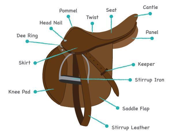 part of a dressage saddle