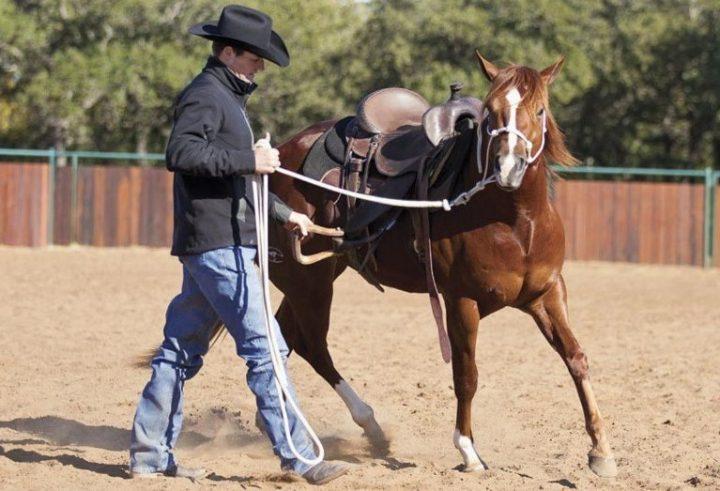 Saddle Breaking