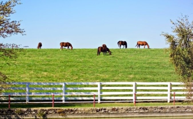 Farming Your Herd