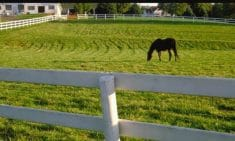 How Much Land Does A Horse Need