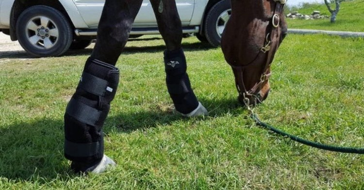 Best Ice boot for Horse Reviews and Buyer Guide