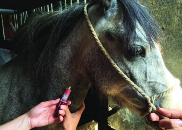 blood test in horse