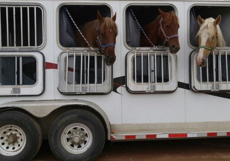 horse trailer tires