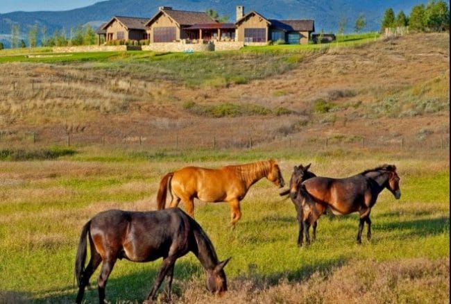 house livestock