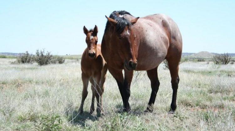 how-long-horse-pregnant