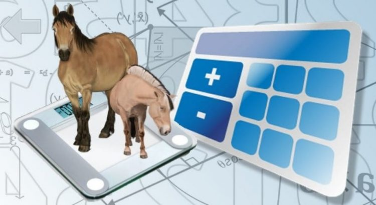 How-Much-Do-Horses-Weigh?
