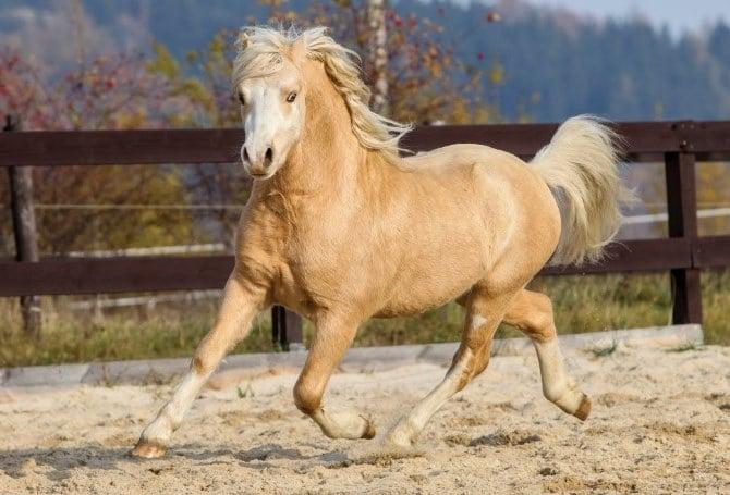 Maximum number of horse per acre