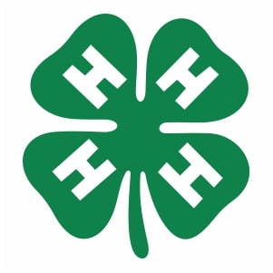 Clover - symbol of 4H