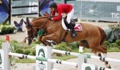 Palloubet d'Halong horse