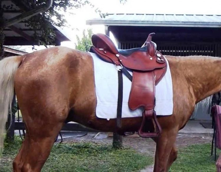 best saddle for high-withered horse