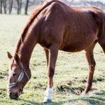Best Senior Horse Feed