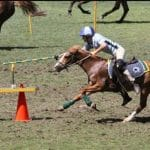 Gymkhana horse events
