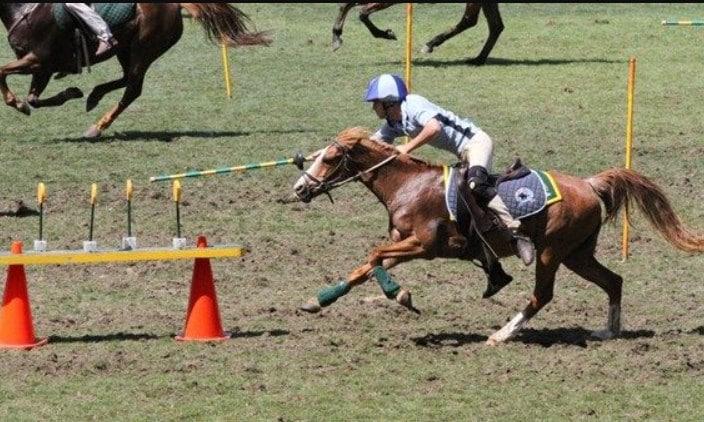 Gymkhana horse events