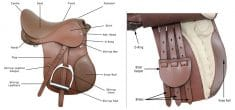 15 parts of English saddle