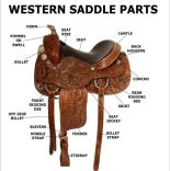 Parts-of-a-Western-saddle