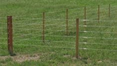 Finish-line-horse-fence-review