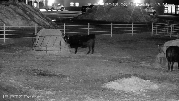 barn camera night vision