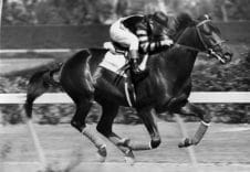 THE-FASTEST-HORSE-EVER-OF-ALL-TIMES